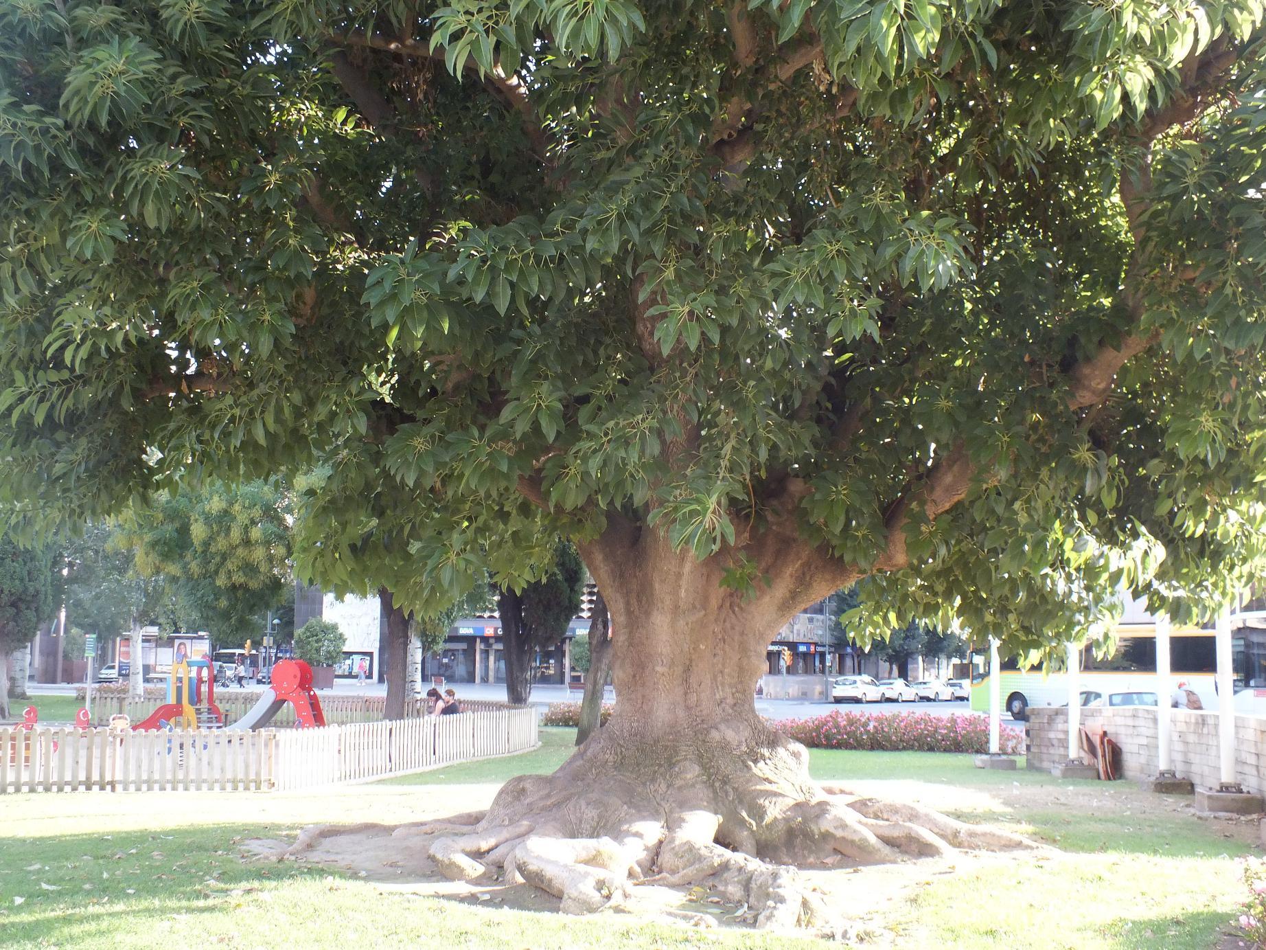 Tarragona_Plaza Imperial