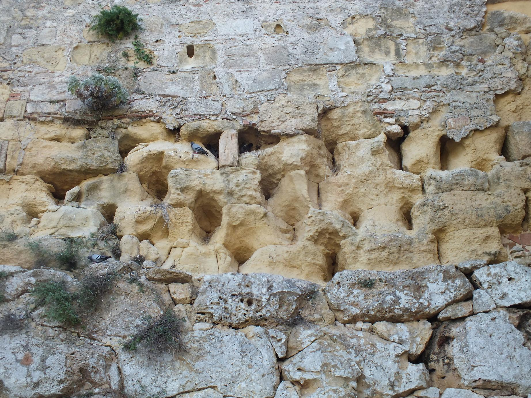 Tarragona_Passeig Arqueològic_pigeon