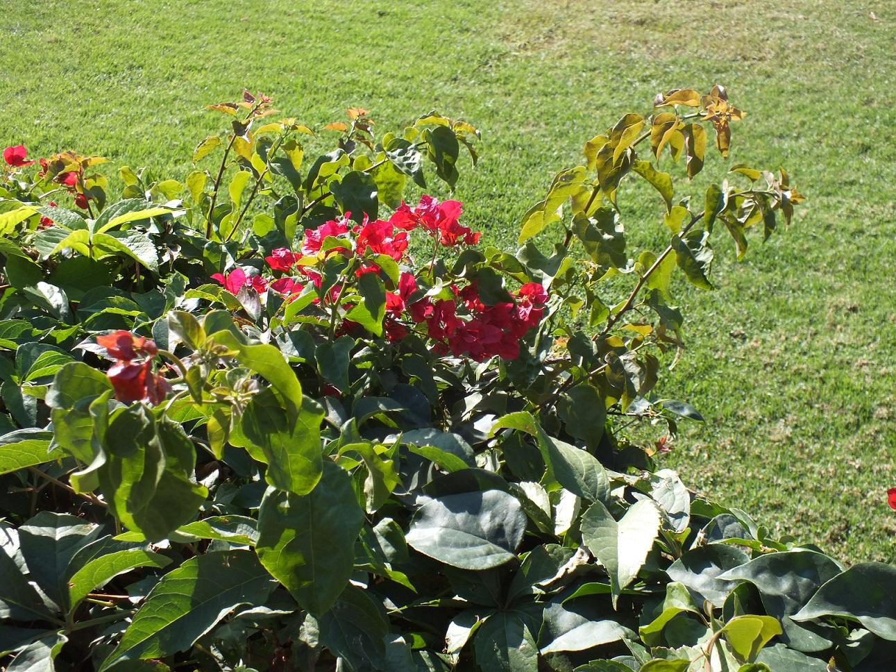 Cambrils flower2