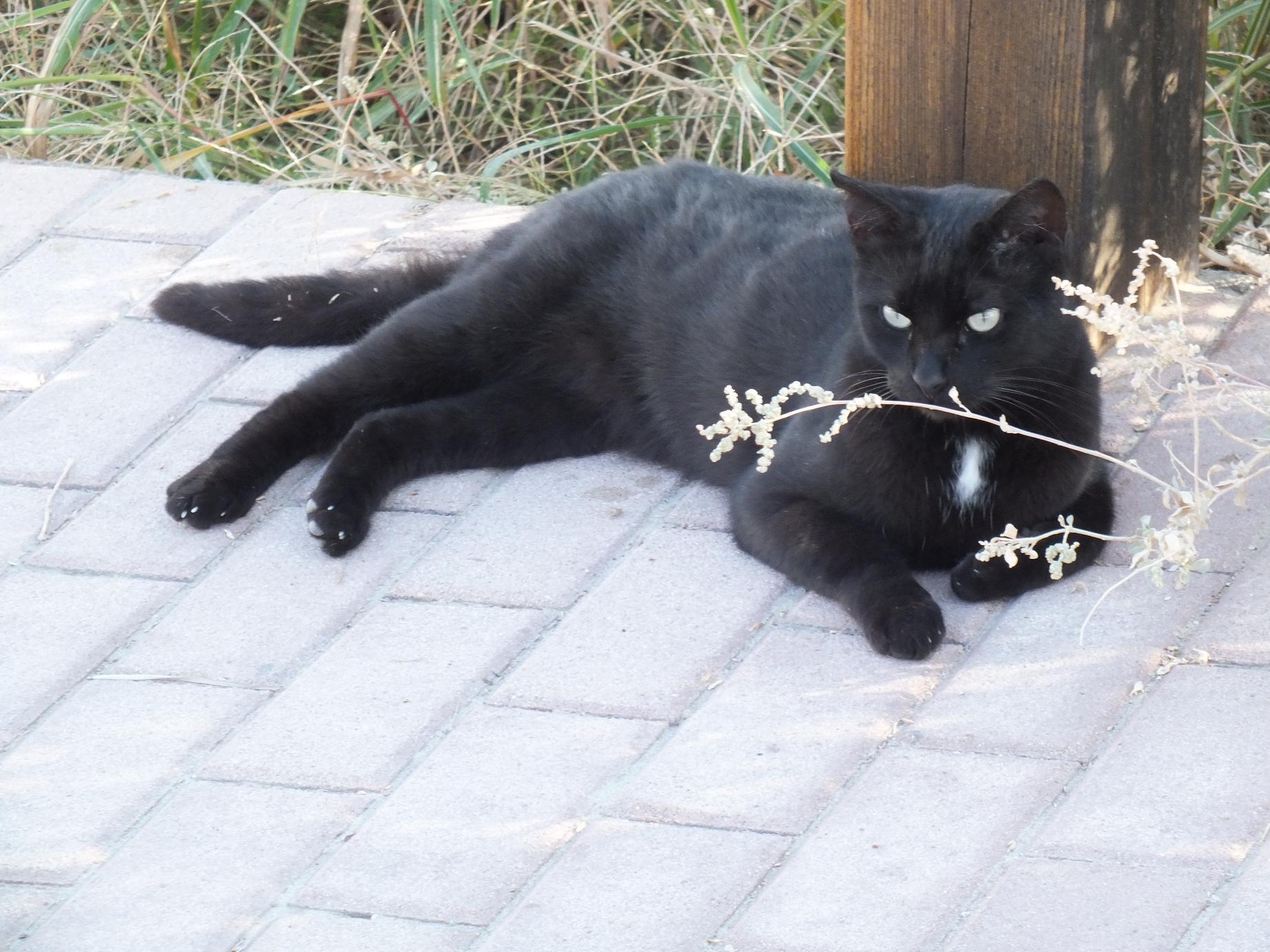 Salou_Cami de Ronda_Cat2