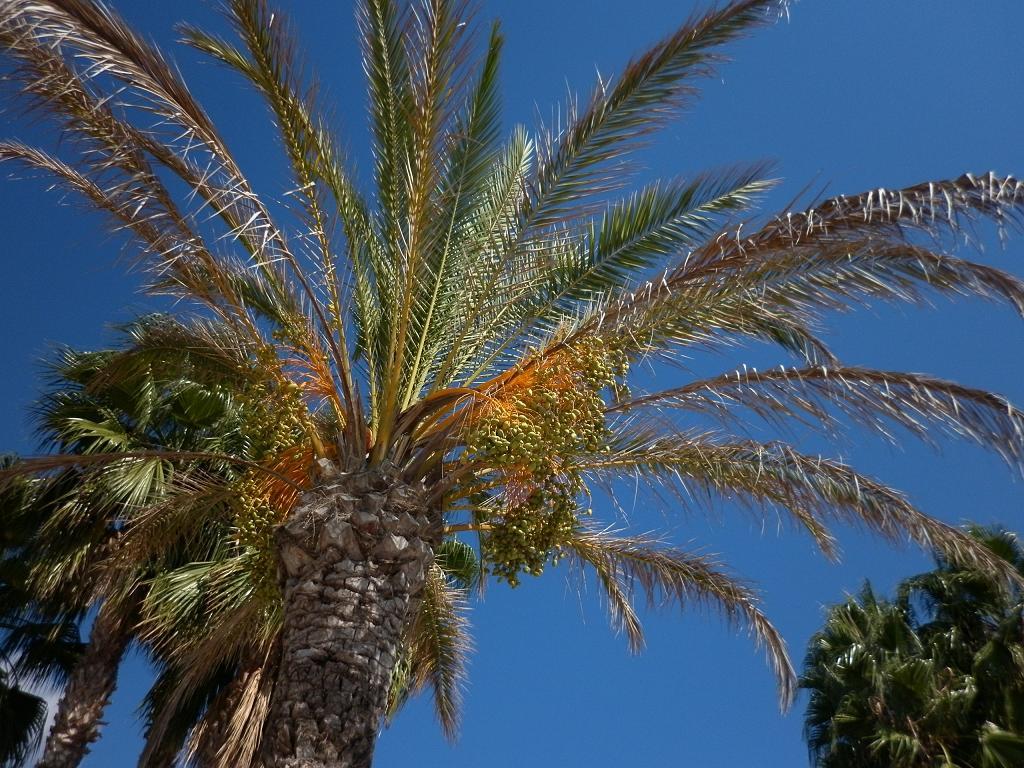 Salou. Palm