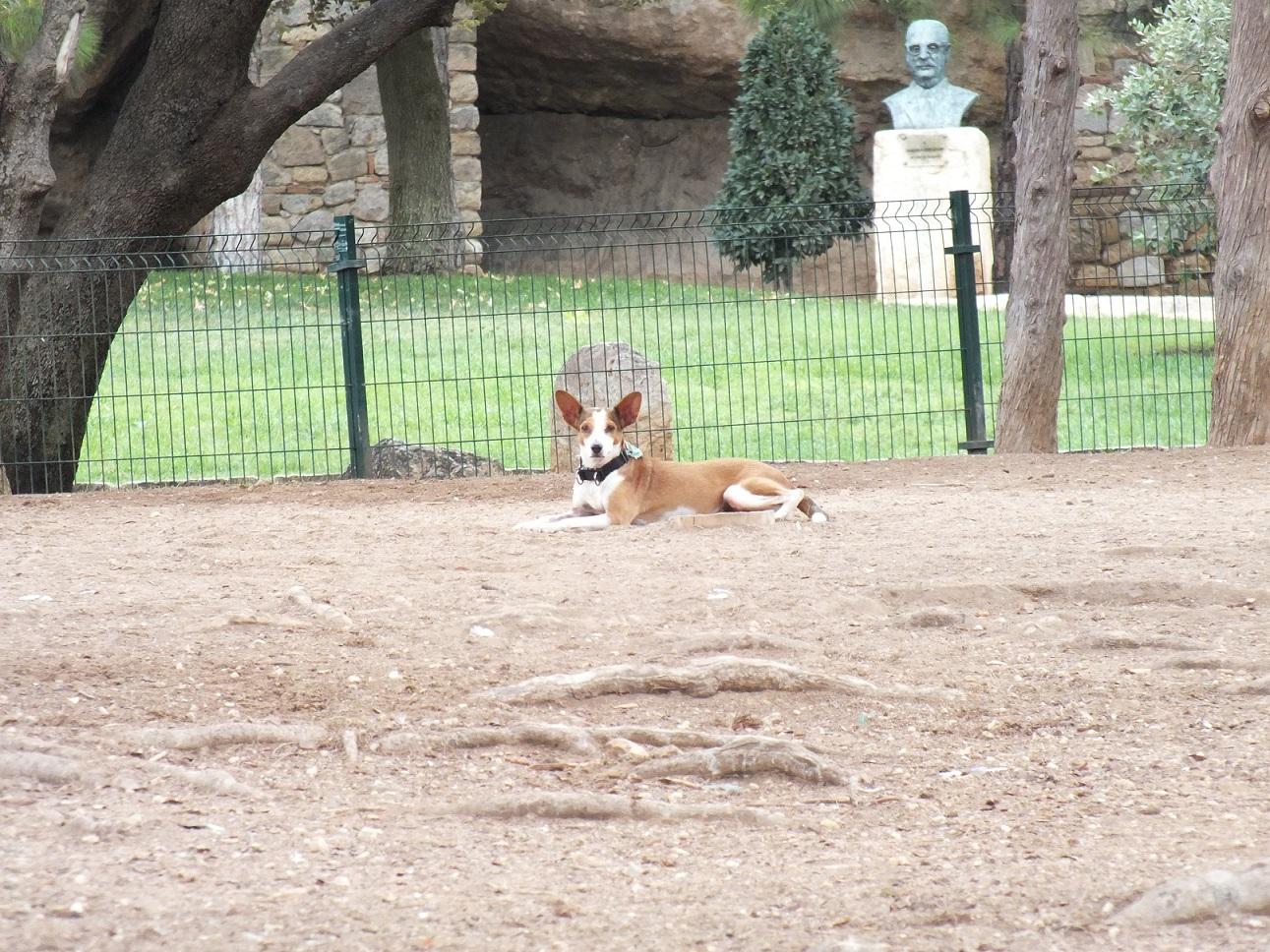 Tarragona dog